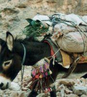 Oman_0128_Wadi_Esel