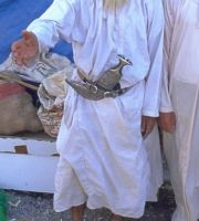 Oman_0601_BAE106_Ar_Rustaq_Markt